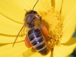 blog - bees-flowers-pollen_w725_h543