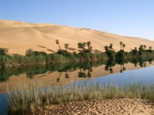 blog - MLK - oasis