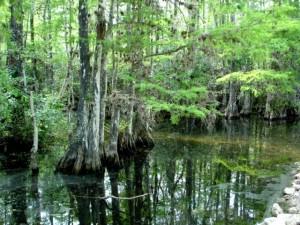 blog - mired - swamp