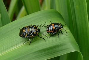blog - ACA - bugs