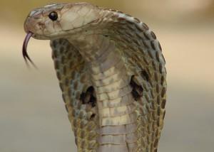 blog - ACA - cobra