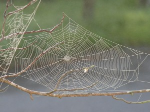 blog - ACA - spider web