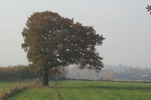 blog - balance - Lopsided_tree