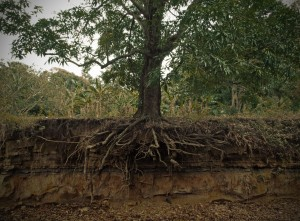 blog - nature - roots