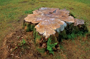 blog - nature - stump