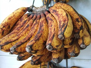 blog - nature - decaying bananas