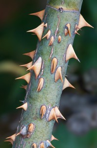 blog - nature - thorns