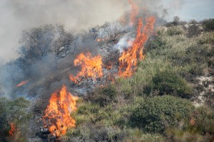 blog - fire - brush fire