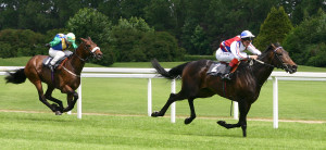 blog - horse - front runner