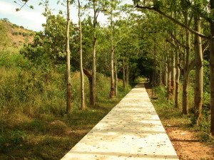 blog - immigration - Pathway_at_Udayagiri_Park