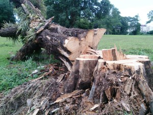 blog - phys forces - cut down tree