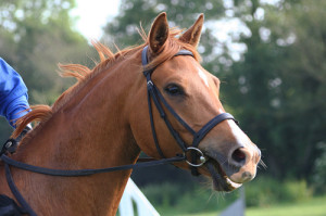 blog - animals - horse bridle and reins