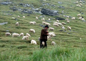 A shepherd with his flock in Romania