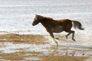 blog -wild - horse running