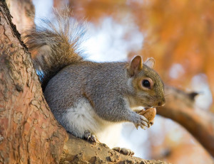 blog - wild - squirrel