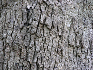 blog - senses - tough bark