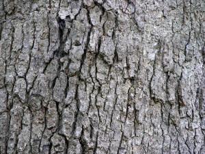 blog - senses - tough bark