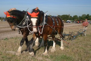 blog - machines - harness horses