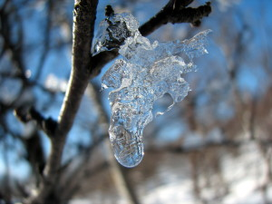 blog - nature - ice melting