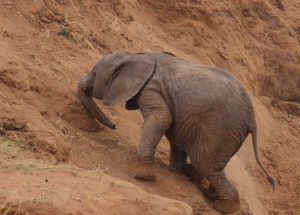 blog - journey - uphill elephant