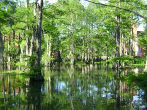 blog-nature-swamp-1