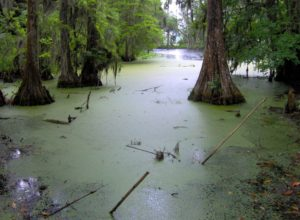 blog-nature-swamp-2